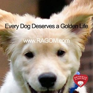 RAGOM - Retrieve a Golden of the Midwest